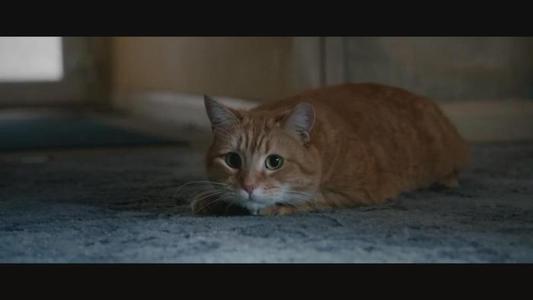 猫中明星鲍勃去世 主人发文缅怀