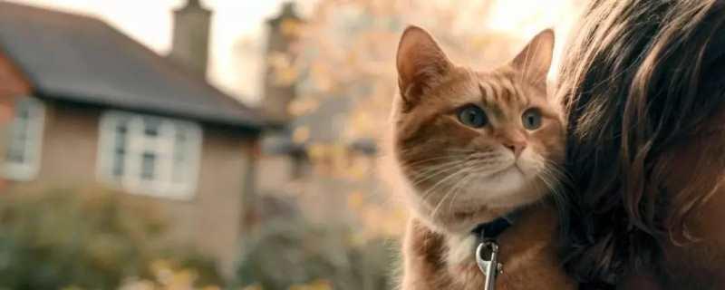 电影流浪猫鲍勃原型是谁
